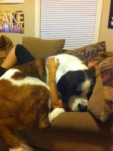 Dog Gigantism