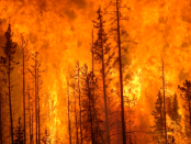 California Forest Fire Caused By Masturbation Accident