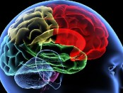 The Damage Masturbation Does to Your Brain Is Amazing